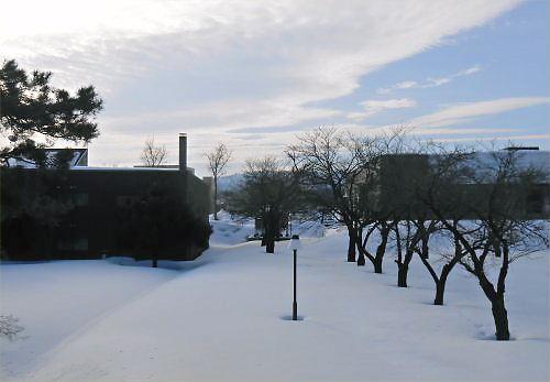 02 500 20150121 雪の桜並木01