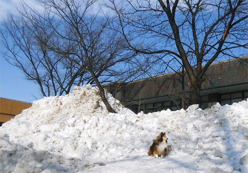 05 500 20150205 勤研センター南雪山Erie