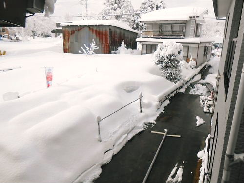 05 500 20150209 10時:LLdog-run 雪景色