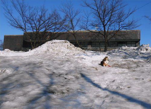 02 500 20150221 勤研センター南側雪山Erie