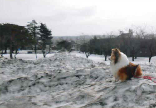 01 500 20150225 残雪の山Erie 01桜並木