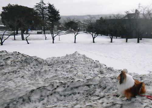 02 500 20150225 残雪の山Erie 02桜並木