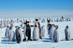 00b 250 penguin Antarctica