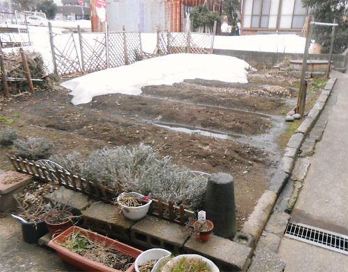 05 500 20150318 LL-garden雪解け