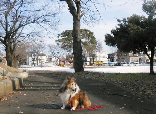 02b 500 20150328 桜並木Erie