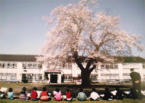 05b 500 20120221 斐太南小旧校舎大桜19890801伐採