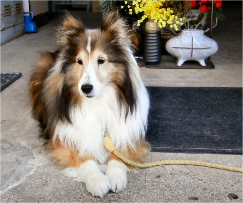 06 500 20150524 Erie番犬中:花粉症回復
