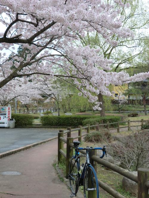 2015.桜ポタ・5