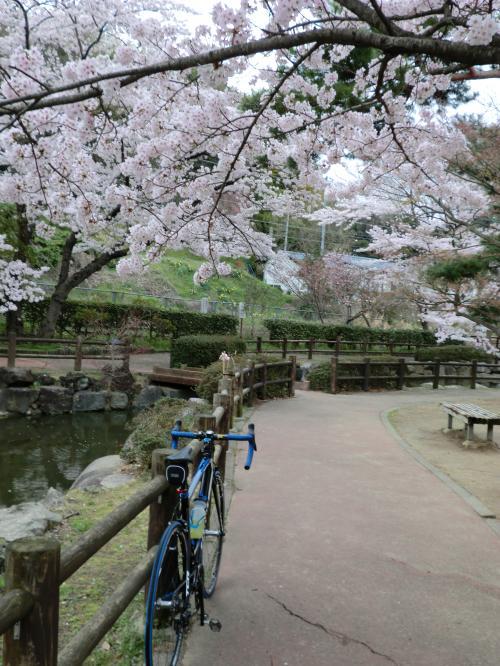 2015.桜ポタ・7