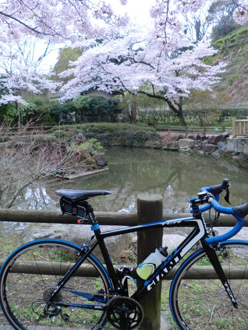 2015.桜ポタ・1