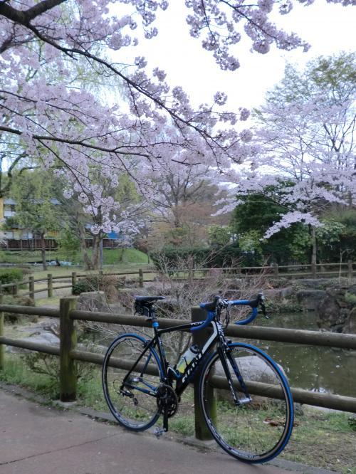 2015.桜ポタ・8
