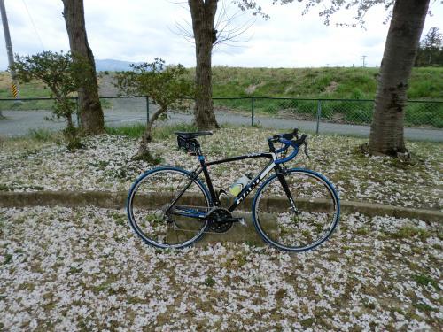 2015.桜ポタ・10