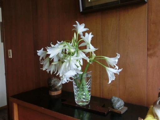 浜木綿の花2