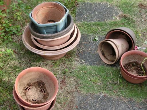 花壇の整備2