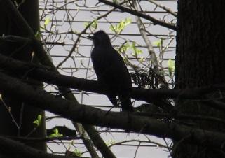 鳥150422