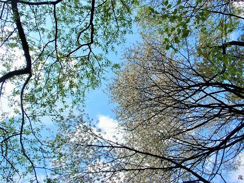 桜150422