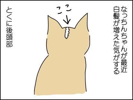 244白髪-1