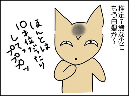 244白髪-2