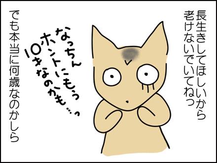 244白髪-4