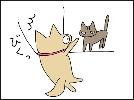 259猫ちゃんが近い-3