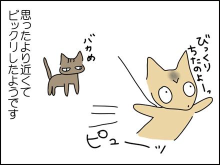 259猫ちゃんが近い-4
