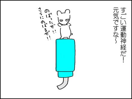 309しろやん脱走-3-3