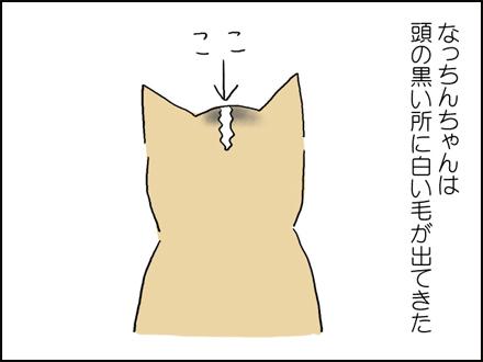 316白い毛-1-1
