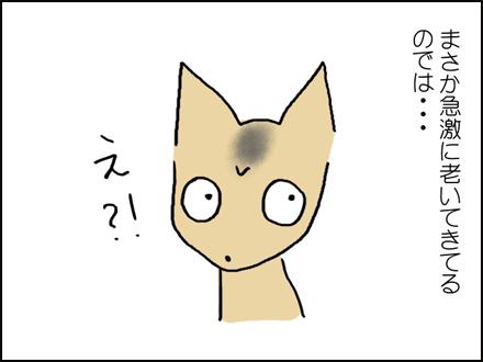 316白い毛-3-3