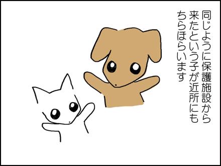 320保護犬いっぱい-2-2