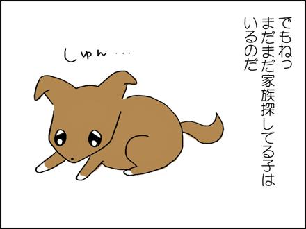 320保護犬いっぱい-5-5