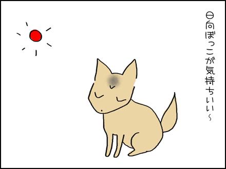 335ひなたぼっこ-1-1