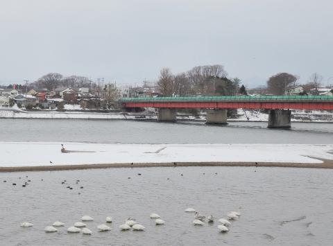 米代川河口201510