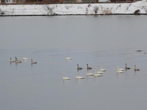 白鳥20152222
