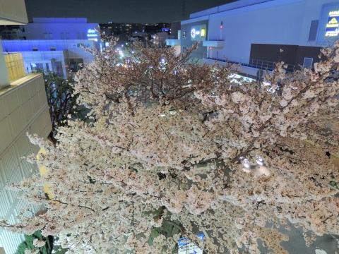 桜2015333