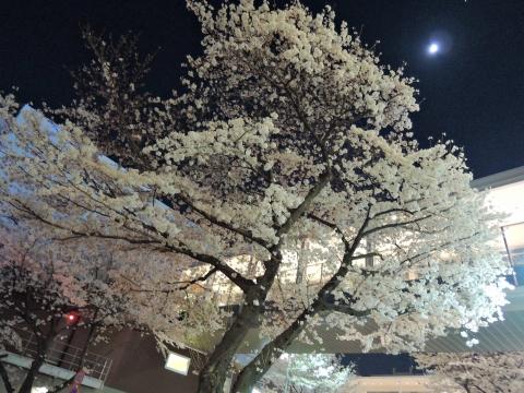 桜2015335