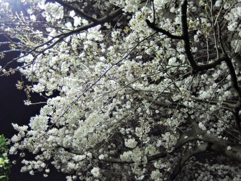 桜20153310