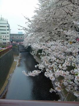 目黒川20151