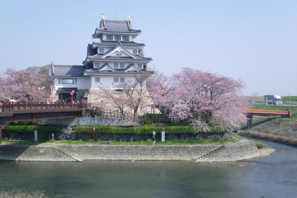 一夜城と桜1