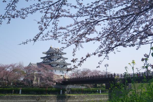 一夜城と桜2