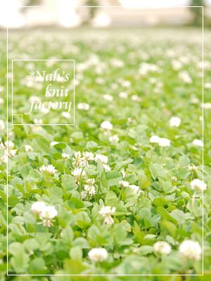 flower2015-10.jpg