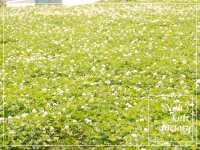 flower2015-15.jpg