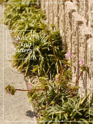 garden2015-14.jpg
