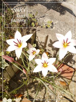 garden2015-17.jpg