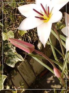 garden2015-18.jpg