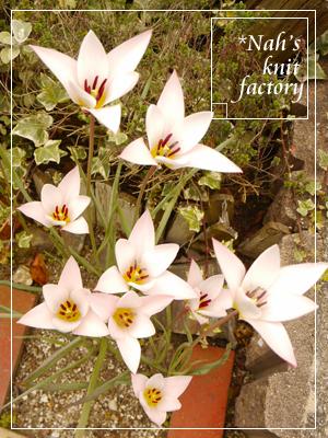 garden2015-19.jpg
