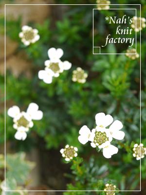 garden2015-22.jpg