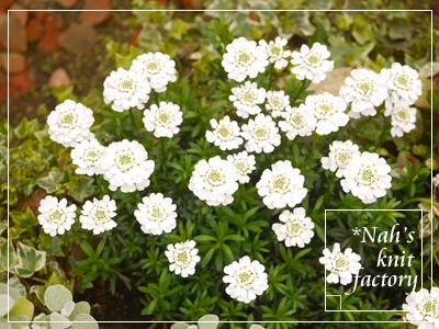 garden2015-23.jpg