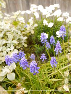 garden2015-24.jpg