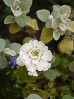 garden2015-27.jpg