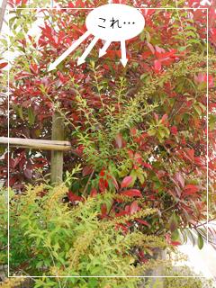 garden2015-39.jpg